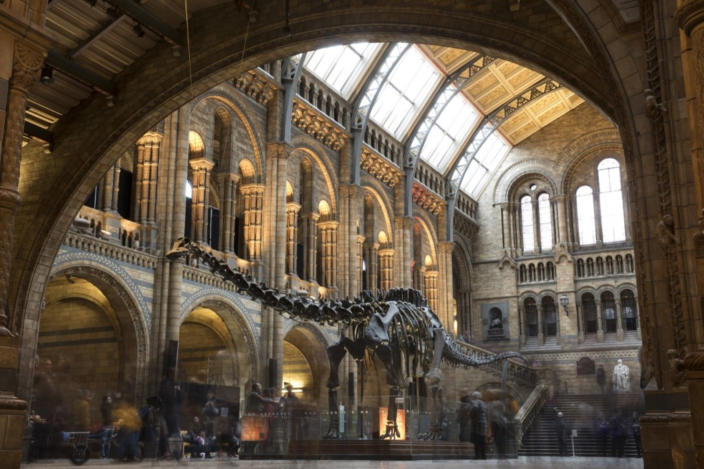 'Dippy' the Diplodocus at the Natural History Museum in London. The 70ft long (21.3m) plaster-cast sauropod replica, which is made up of 292 bones, is set to leave the museum, where it has been for 109 years, before going on a national tour. Dan Kitwood/Getty Images
