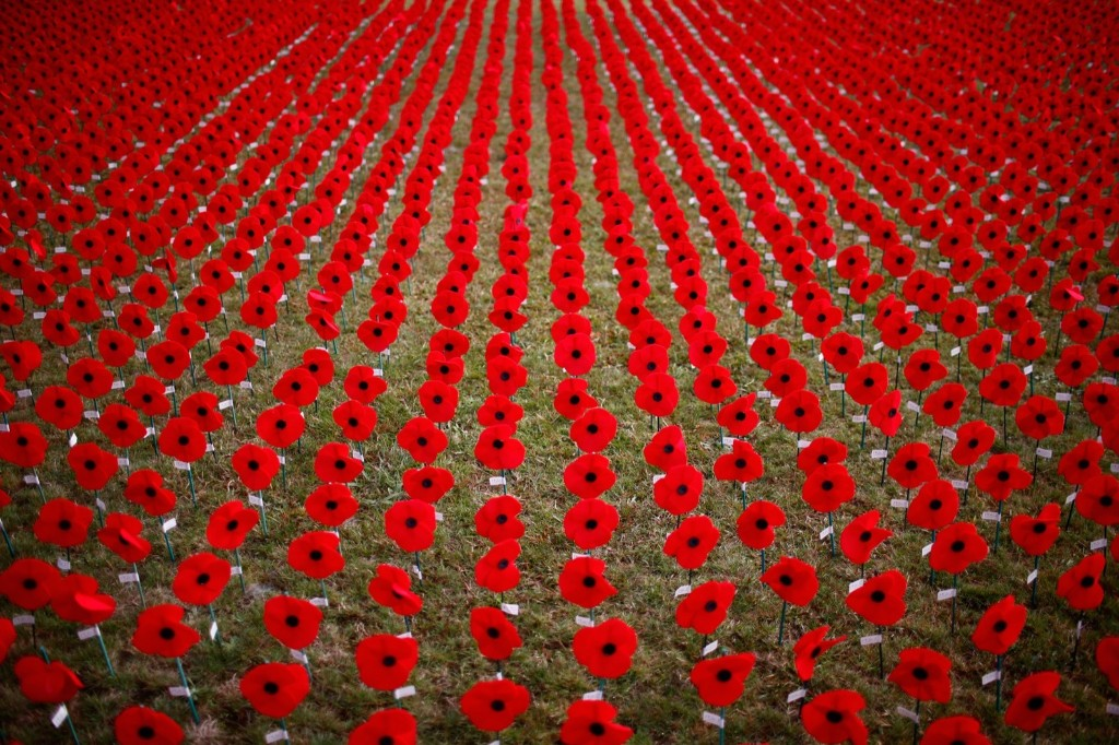 A sea of red poppies at the site of the former Royal New Zealand Air Force base in Auckland. Phil Walter/Getty Images)