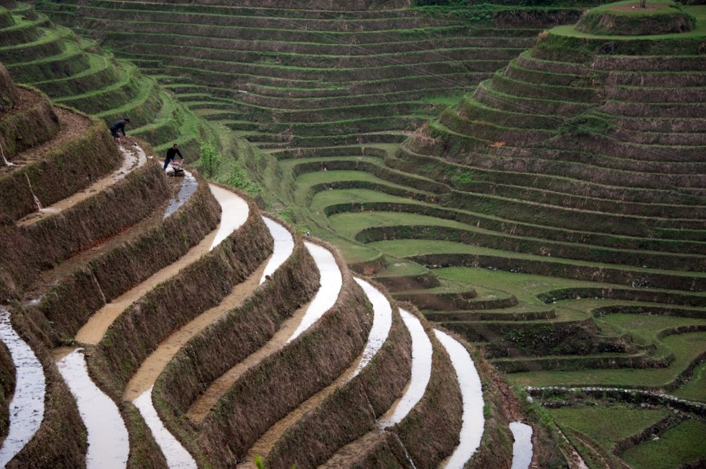 Farmers working in terraced rice fields in southern China's Guangxi Zhuang Autonomous Region. JOHANNES EISELE/AFP/Getty Images
