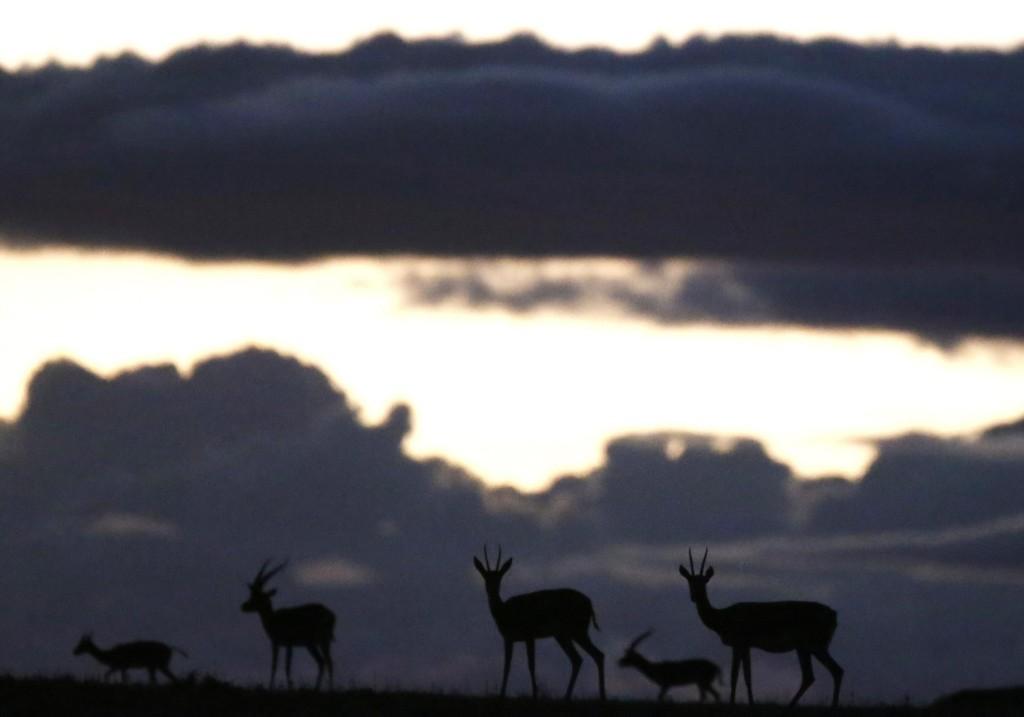 Animals graze at Naboisho Conservancy near Masai Mara National Reserve in Kenya. REUTERS/Goran Tomasevic