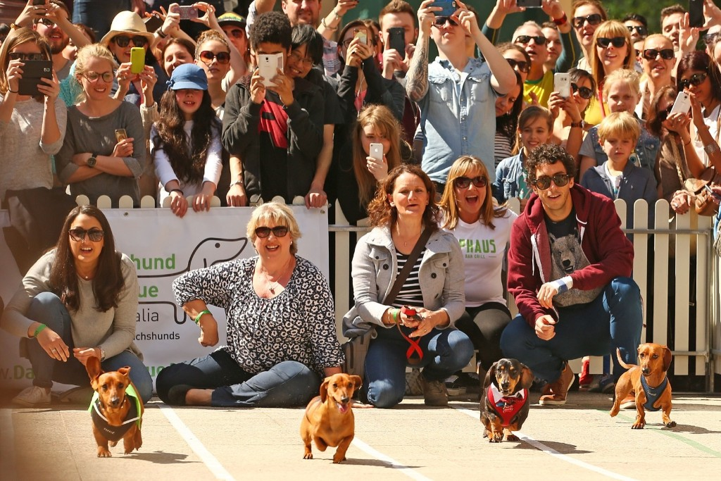 Dachshunds compete in the Hophaus Southgate Inaugural Dachshund Running of the Wieners Race, Satuday, in Melbourne, Australia. Scott Barbour/Getty Images
