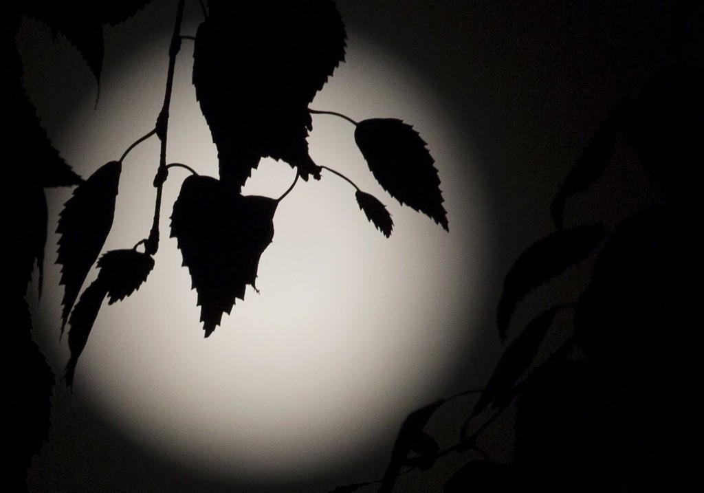 Leaves are silhouetted against a full moon, known as the Blue Moon, over north London. REUTERS/Neil Hall