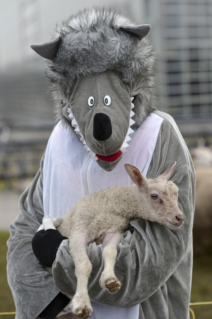 A person dressed like a wolf holding a lamb demonstrates against the protection of wolves in France. FREDERICK FLORIN/AFP/Getty Images