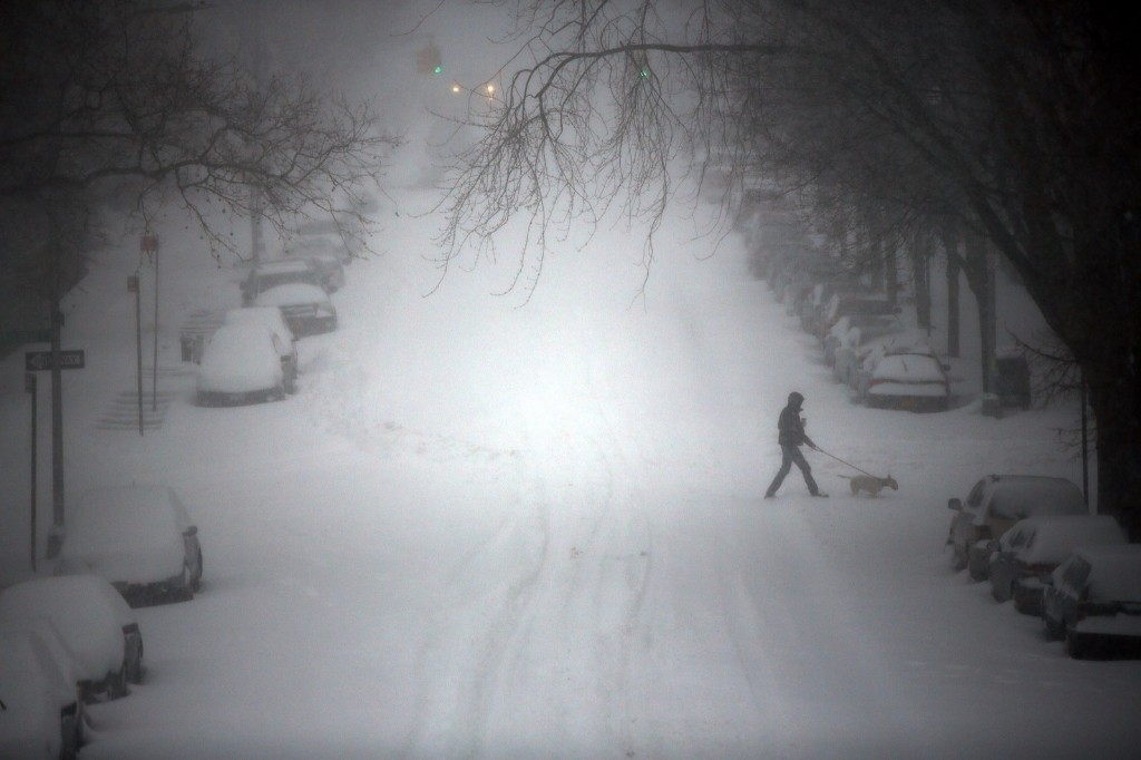 Dog walking through blizzard like conditions in Brooklyn. Spencer Platt/Getty Images