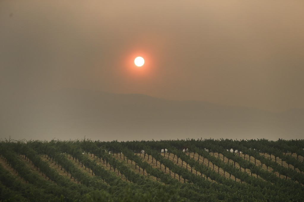 The setting sun is reddened by smoke from a wildfire over a vineyard Monday, July 30, 2018, in Finley, Calif. Northern California fire officials have added residents of two towns near Clear Lake to the list of those ordered to evacuate. The notice was issued Monday for the towns of Kelseyville and Finley. (AP Photo/Marcio Jose Sanchez)
