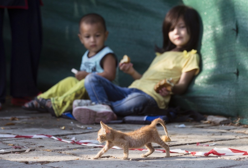 A homeless kitten passes by migrant children as they wait to be registered at a police station in Kos, Greece. AP Photo/Alexander Zemlianichenko