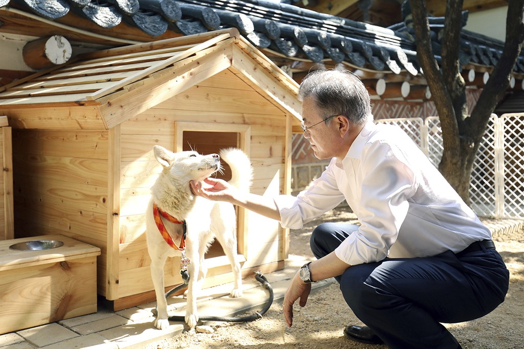 In this photo provided on Oct. 2018 by South Korea Presidential Blue House, South Korean President Moon Jae-in touches a white Pungsan dog, named Gomi, from North Korea, in Seoul, South Korea. (South Korea Presidential Blue House via AP)