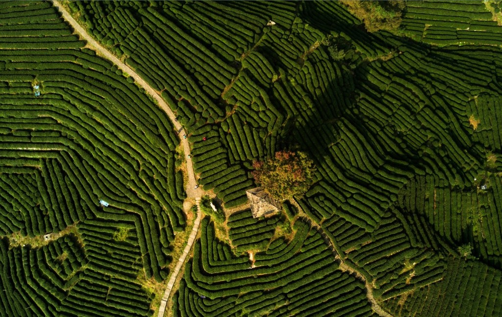The tea plantations near Longjing village near Hangzhou in east China. Longjing is regarded as one of the best teas in China, as well as one of the most expensive. JOHANNES EISELE/AFP/Getty Images