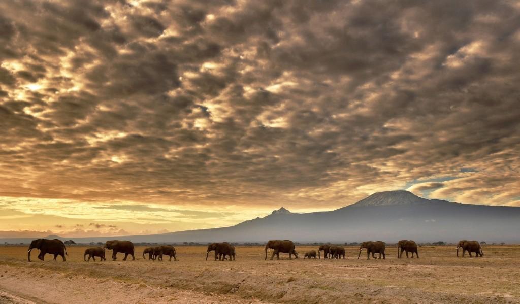 A herd of elephants in Amboseli National Park in Kenya. CARL DE SOUZA/AFP/Getty Images