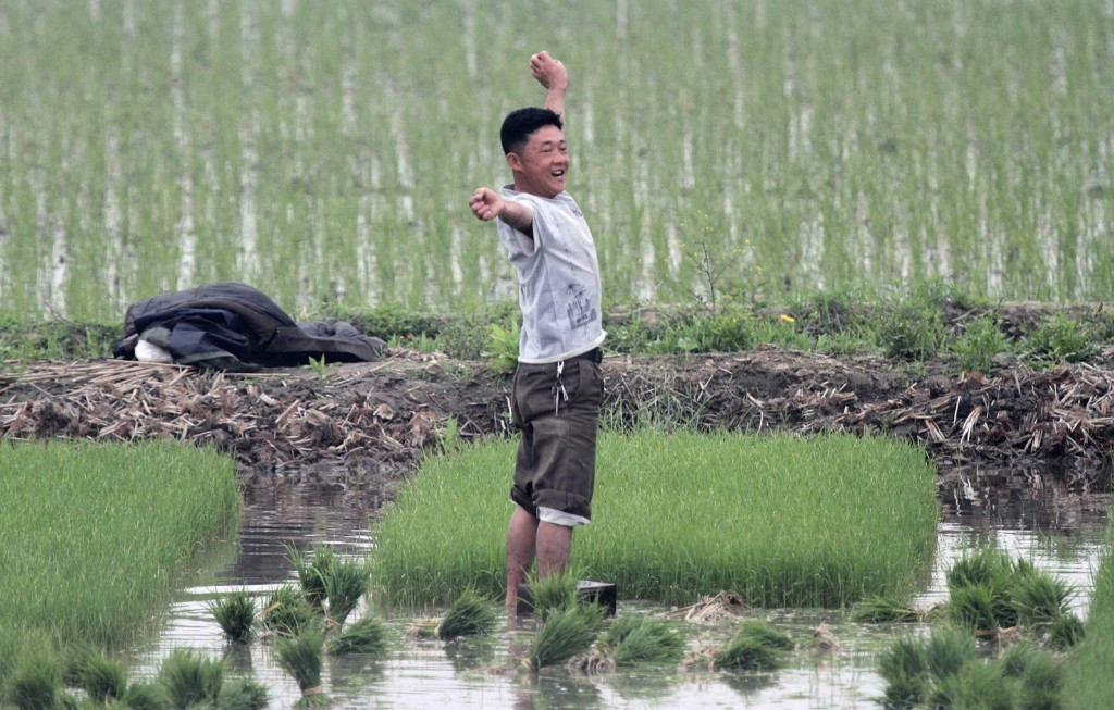 A North Korean farmer works at a paddy field on Hwanggumpyong Island in the middle of the Yalu River. REUTERS/Jacky Chen