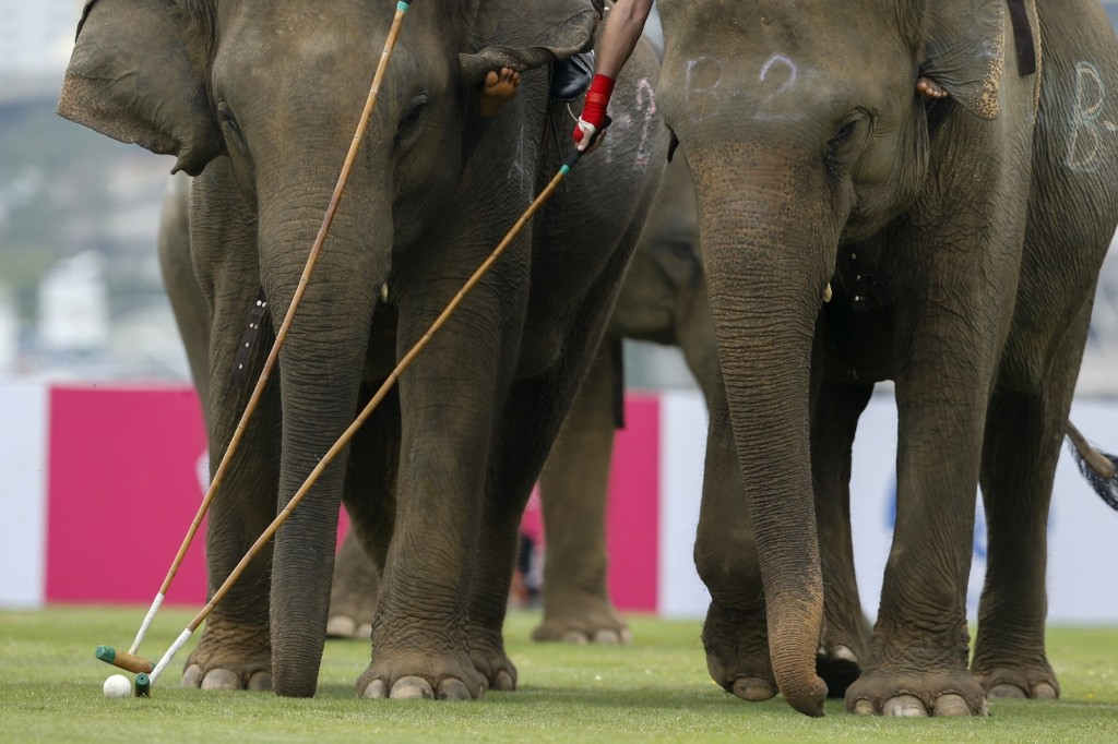An exhibition match during the annual King's Cup Elephant Polo Tournament in Bangkok. REUTERS/Jorge Silva