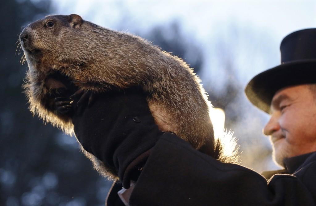 Groundhog Club co-handler John Griffiths holds Punxsutawney Phil during the annual celebration of Groundhog Day. AP Photo/Keith Srakocic