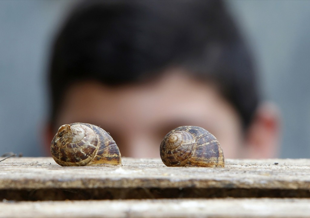 A boy inspects snails on top of a wooden box in Darb Seim town, south Lebanon. REUTERS/Ali Hashisho