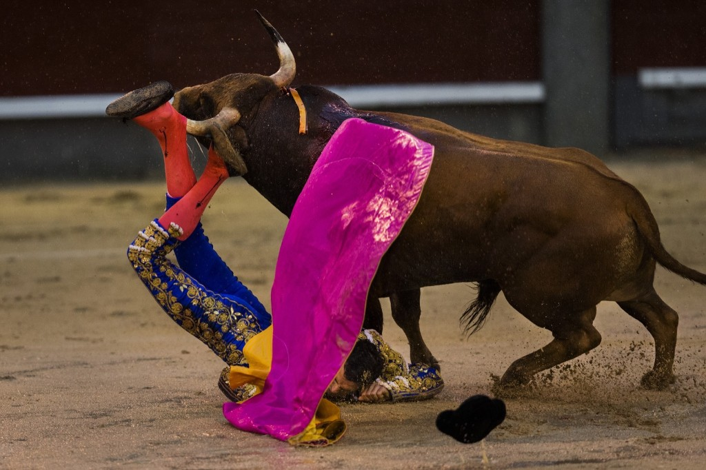 A fighting bull gores bullfighter Antonio Puerta at Las Ventas bullring in Madrid. AP Photo/Andres Kudacki