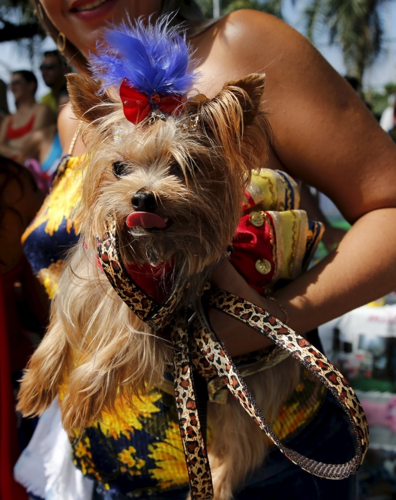 "A carnival reveller and her dog take part in the ""Blocao"", or dog carnival parade, during carnival festivities in Rio. REUTERS/Sergio Moraes"