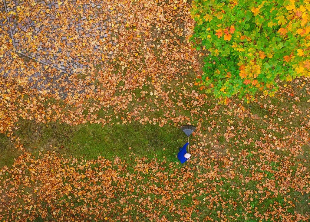 Colorful autumn leaves on a meadow under a maple tree in Brandenburg, eastern Germany. PATRICK PLEUL/AFP/Getty Images