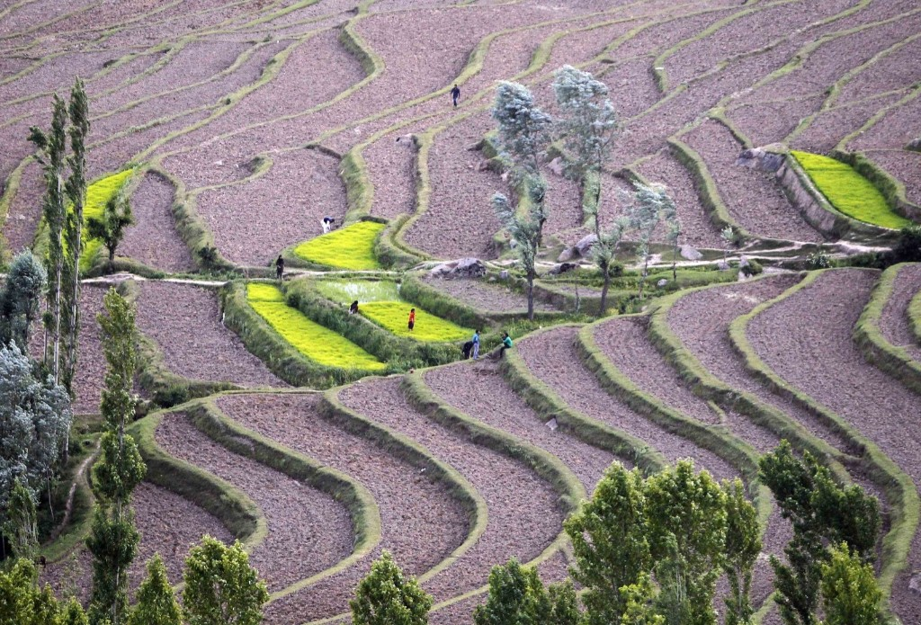 Kashmiri farmers work the paddy fields in Bandipora, June 10. REUTERS/Danish Ismail