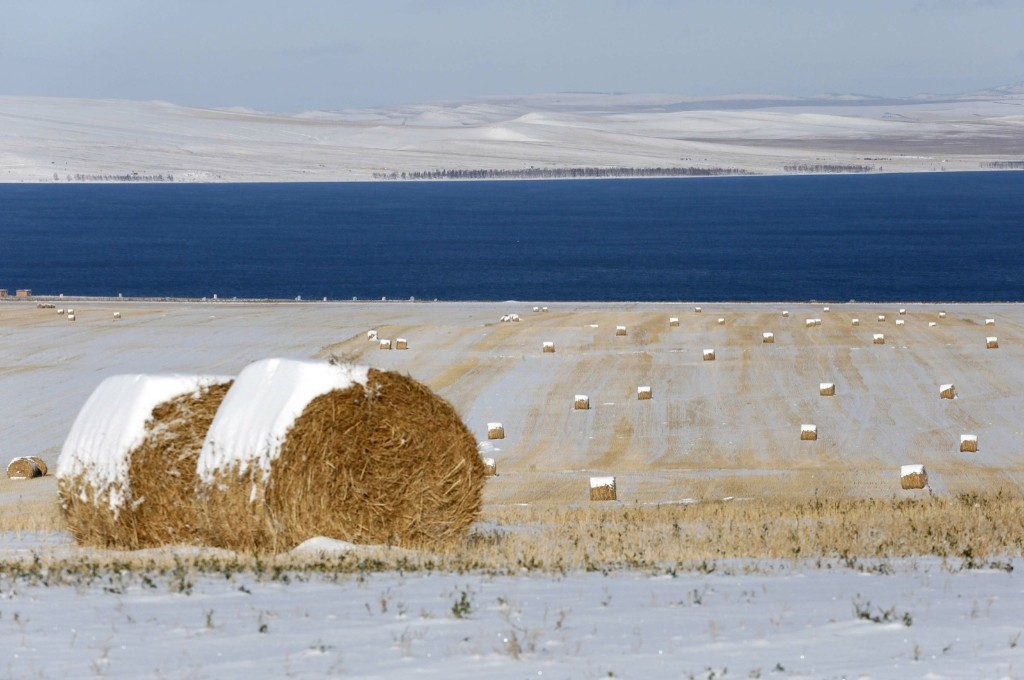 Rolls of hay covered with snow on the bank of Belyo Lake in Khakassia, Siberia. REUTERS/Ilya Naymushin