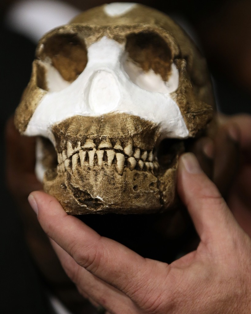 A reconstruction of Homo naledi presented during the announcement made in Magaliesburg, South Africa, Thursday. AP Photo/Themba Hadebe