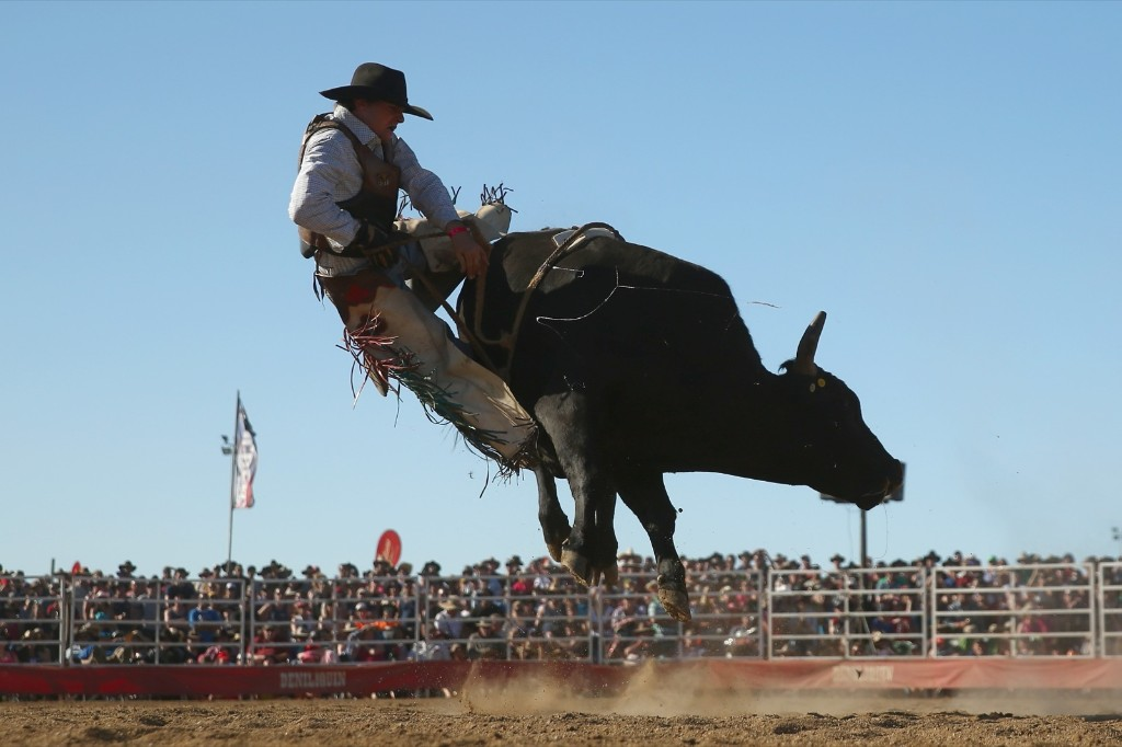 A bull rider is bucked off during the Bull Ride Spectacular in Deniliquin, Australia. Mark Kolbe/Getty Images