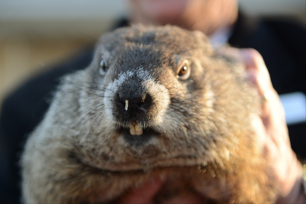 Groundhog co-handler Ron Ploucha holds up groundhog Punxsutawney Phil after Phil's annual weather prediction. REUTERS/Alan Freed