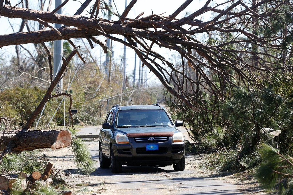 A driver steers through the trees toppled by Hurricane Michael in Parker, Florida, U.S., October 13, 2018. REUTERS/Terray Sylvester