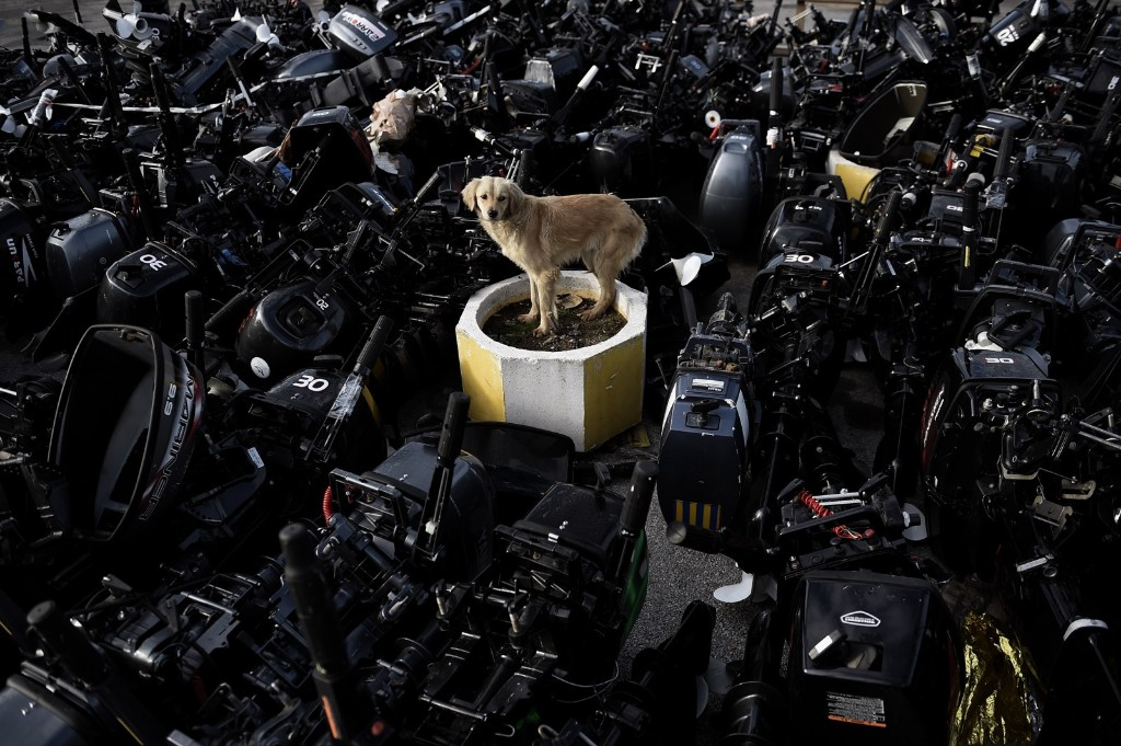 A stray dog stands among outboard motors that were used by refugees and migrants to reach the Greek island of Lesbos. ARIS MESSINIS/AFP/Getty Images