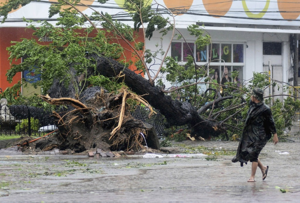 A man walks past a tree uprooted by strong winds brought by super Typhoon Haiyan that hit Cebu city, central Philippines. REUTERS/Zander Casas