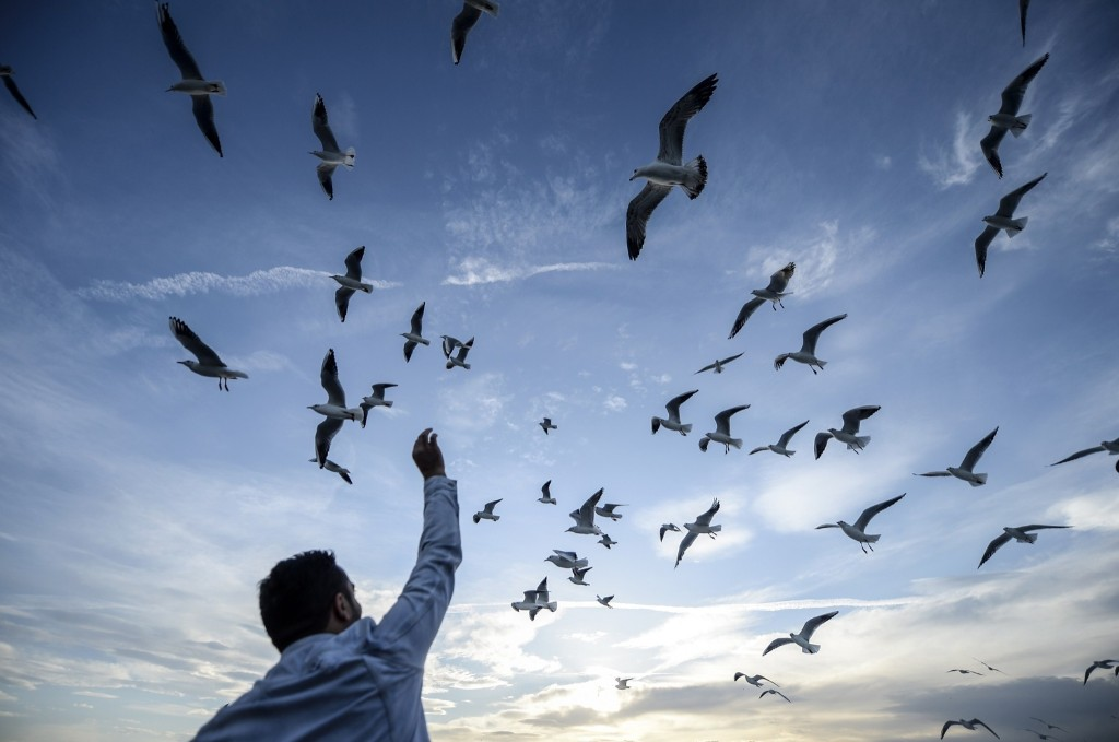 A man feeds seagulls as they travel on the Bosphorus in Istanbul. BULENT KILIC/AFP/Getty Images