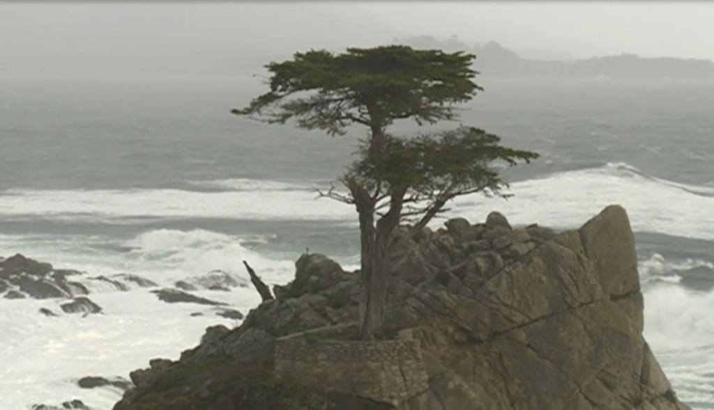 "This Friday, Feb. 15, 2019, still image taken from video courtesy of KSBW station shows the damaged Lone Cypress tree in Pebble Beach on the Monterey Peninsula in Monterey County, Calif. Gusty winds during a recent storm broke a branch of the famous cypress tree believed to be more than 250 years old on California's northern coast. The Pebble Beach Company said Friday that despite the damage, an arborist has recently examined the Lone Cypress and confirmed it's ""healthy and remains secure on its rocky perch."" (KSBW via AP)"