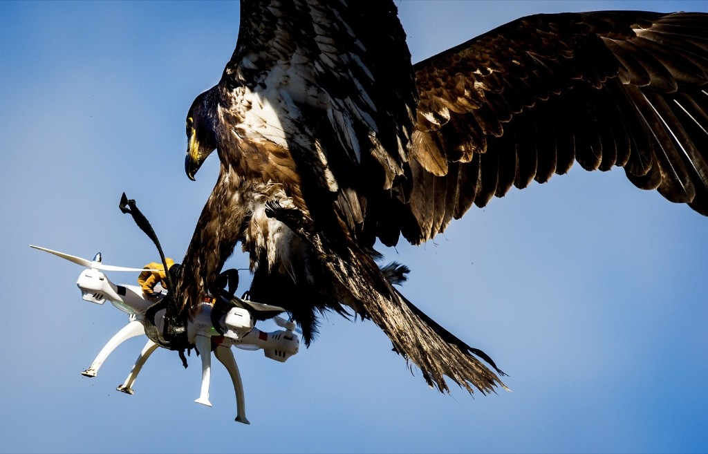 An eagle of the Guard from Above company grasps a drone during a police exercise in Katwijk, Netherlands. KOEN VAN WEEL/AFP/Getty Images