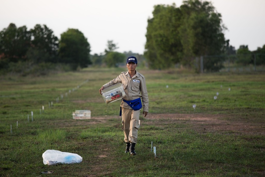 A handler brings a mine detection rat to a shaded area after a training session Thursday, in Siem Reap, Cambodia. Taylor Weidman/Getty Images