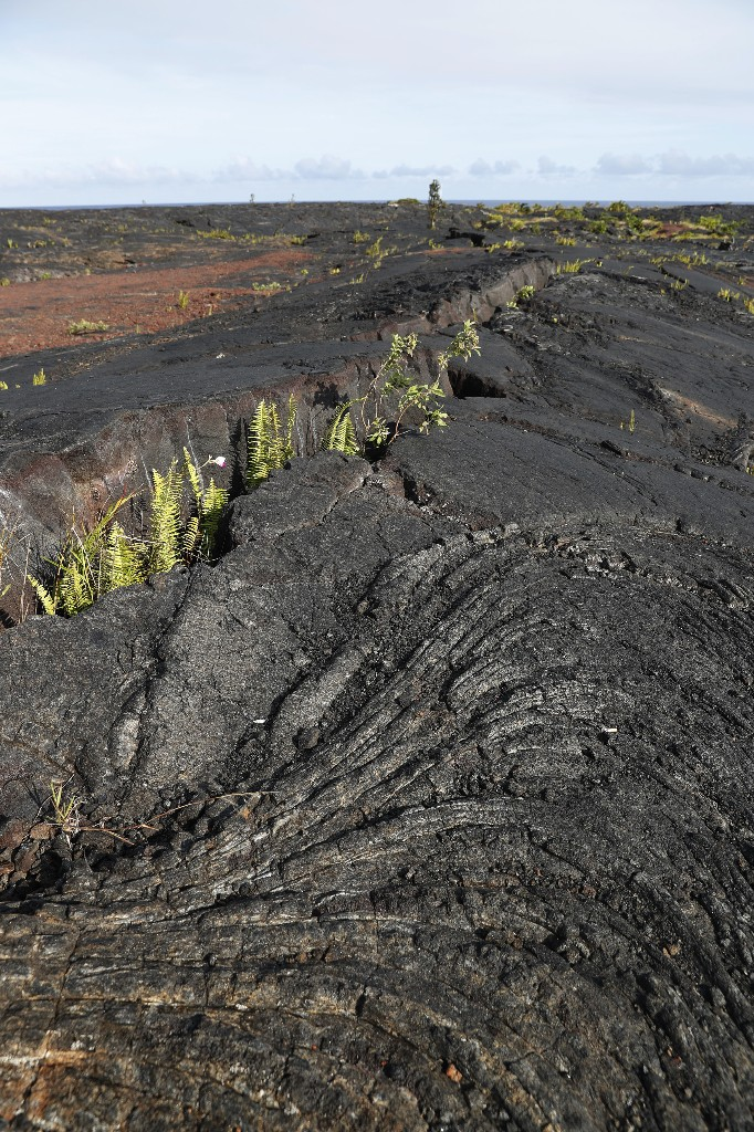 This photo shows some of the 1990 lava flow from Kilauea, one of the world's most active volcanoes, Sunday, May 6, 2018, in Kalapana, a town south of the Leilani Estates subdivision, Hawaii. Hawaii officials said the decimated homes were in the subdivision, where molten rock, toxic gas and steam have been bursting through openings in the ground created by the Kilauea volcano. (AP Photo/Marco Garcia)