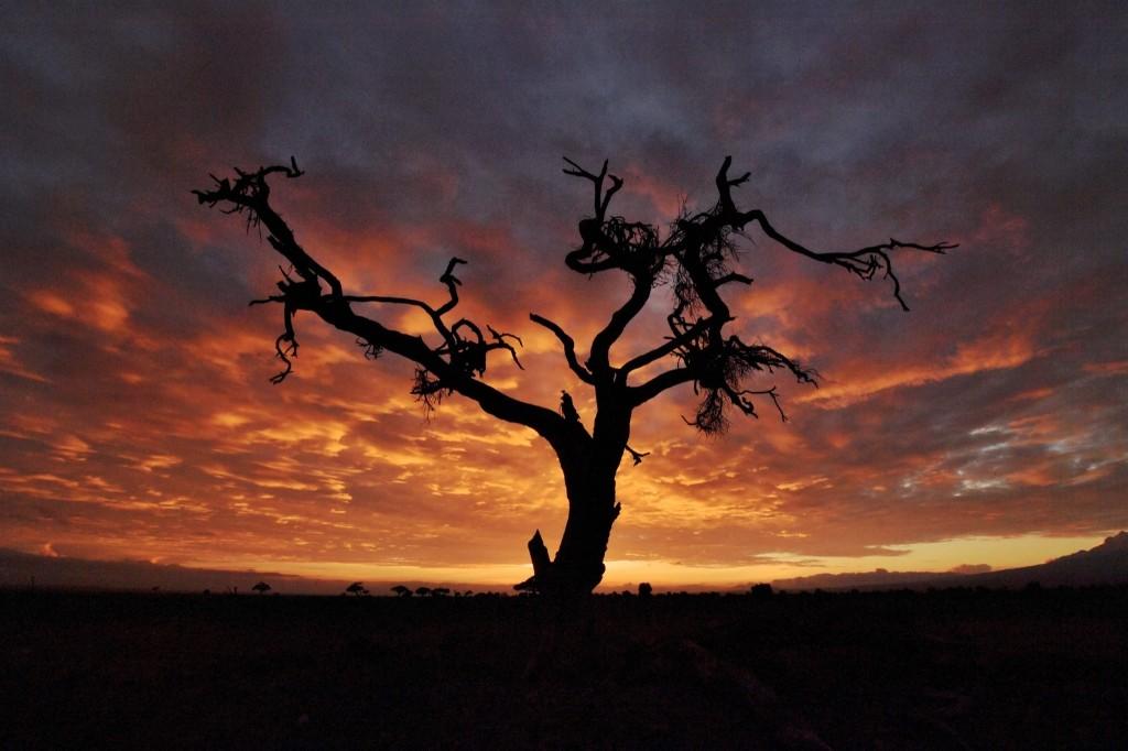 A tree at sunrise in Kenya's Amboseli National Park. CARL DE SOUZA/AFP/Getty Images