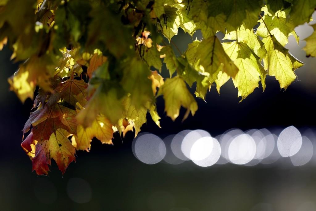 The sun shines behind colorful autumn leaves in Munich. AP Photo/Matthias Schrader