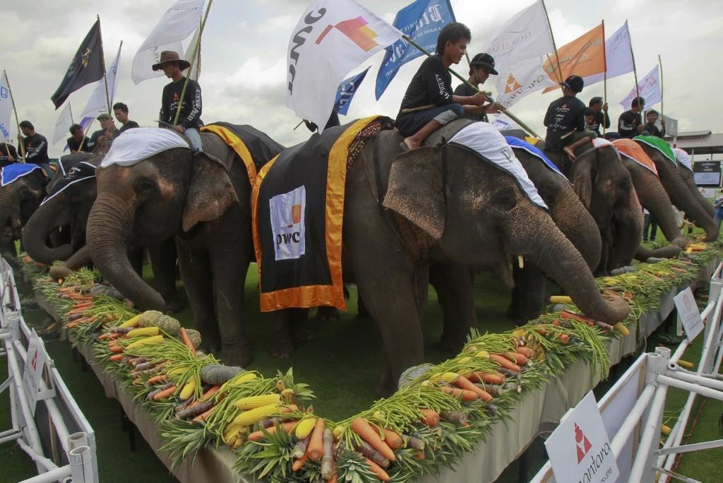 Elephants chow down during the King's Cup Elephant Polo Tournament in Samut Prakan province, near Bangkok. REUTERS/Chaiwat Subprasom