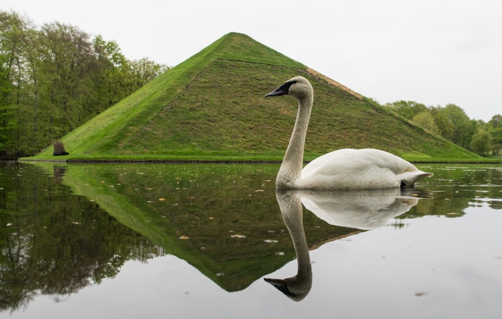 "A swan swims past the ""Seepyramide"" at the Fuerst-Pueckler-Park in Branitz, eastern Germany. PATRICK PLEUL/AFP/Getty Images"