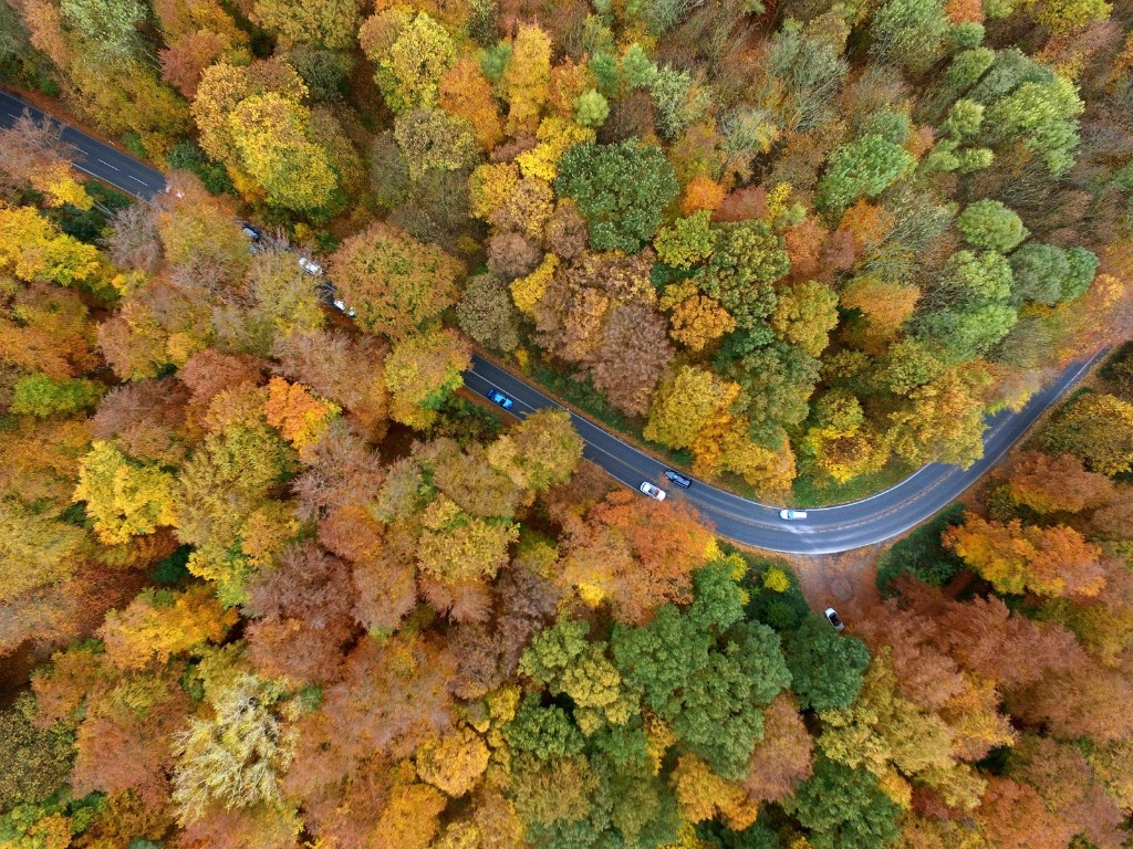 The autumnal landscape in Cologne. HENNING KAISER/AFP/Getty Images