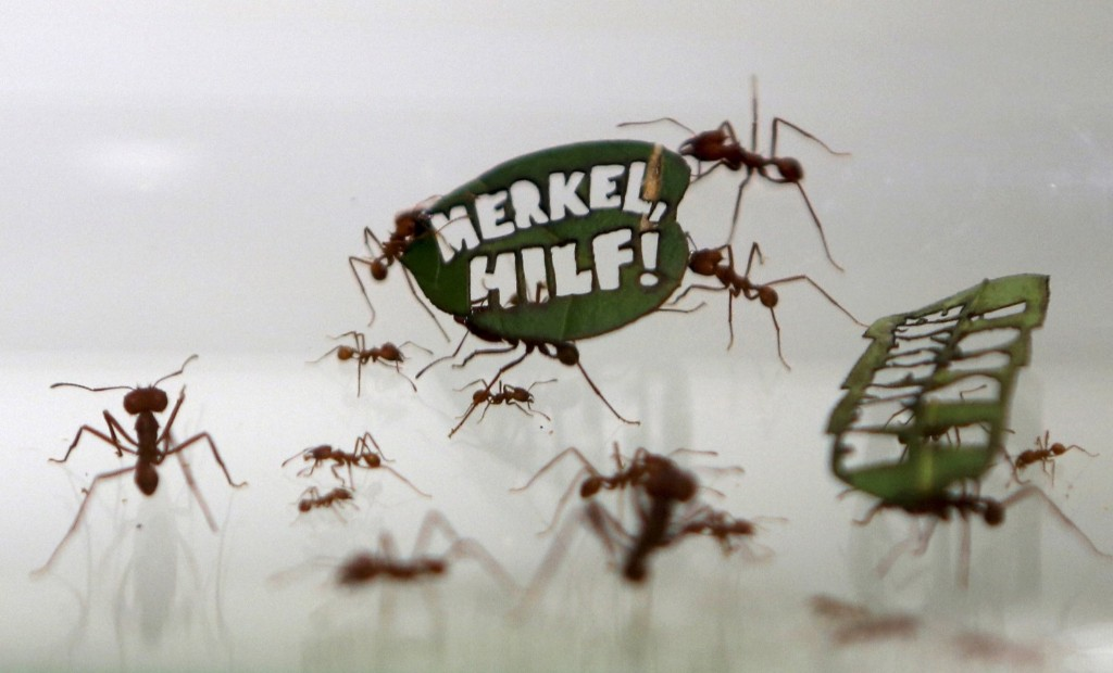 """Ants carry a leaf with a slogan reading """"Merkel, Help!"""", a reference to German Chancellor Angela Merkel, at the zoo in Cologne. REUTERS/Ina Fassbender"""