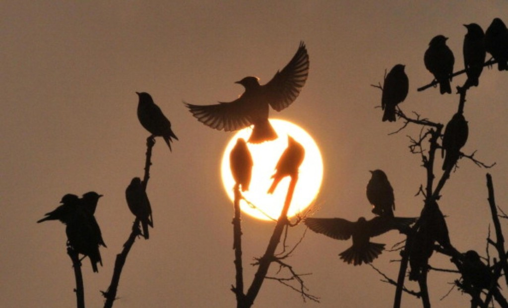 Birds gather on a leafless tree as the sun goes down for the last time in 2013 in Jaipur, India,. Himanshu Vyas/Hindustan Times via Getty Images