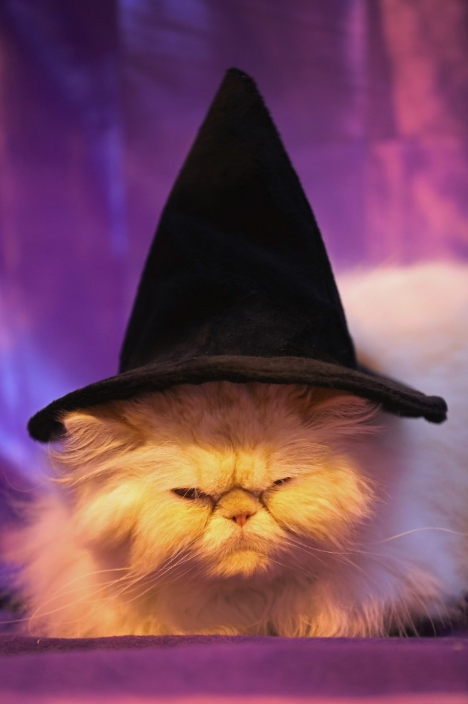 Bailey, a four-year-old Persian Red Colour Point, gets into the Halloween spirit during the Governing Council of the Cat Fancy's 'Supreme Championship Cat Show' in Birmingham, England. Christopher Furlong/Getty Images