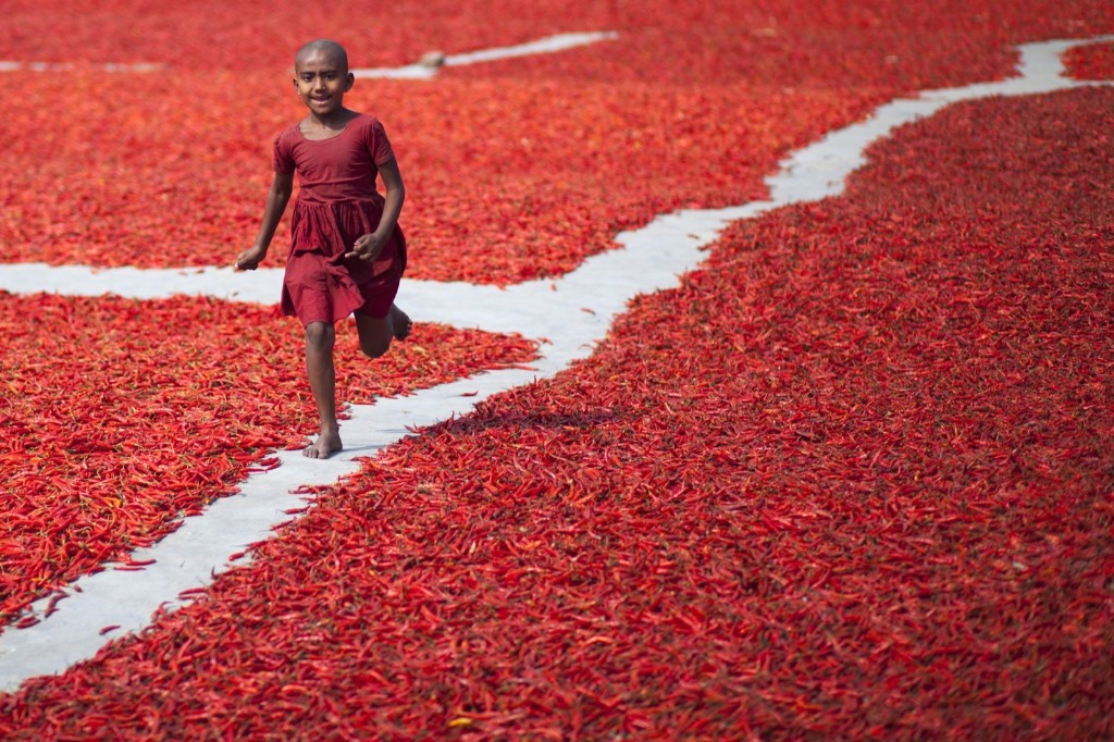 A kid runs through a field of dried red chili peppers near the Jamuna river, 240 kms northwest of Dhaka in Bangladesh. Red chili is the main source of income in the area. Zakir Hossain Chowdhury/Anadolu Agency/Getty Images