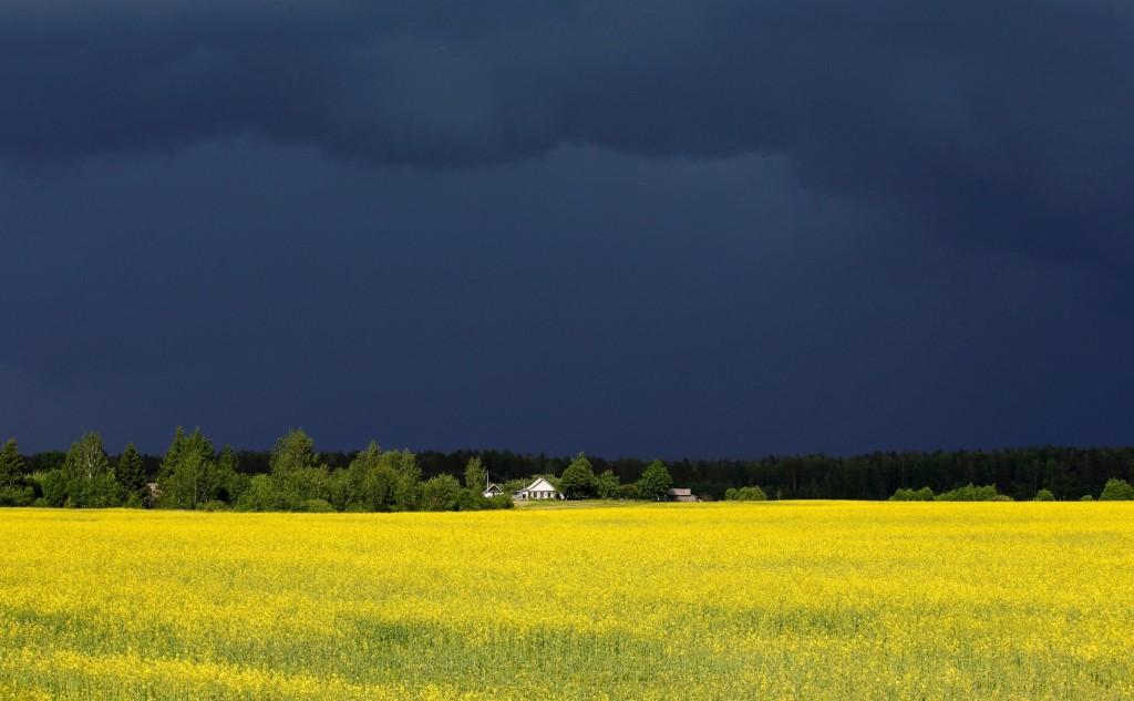 Stormy sky over the village of Vatslavova, Belarus. REUTERS/Vasily Fedosenko