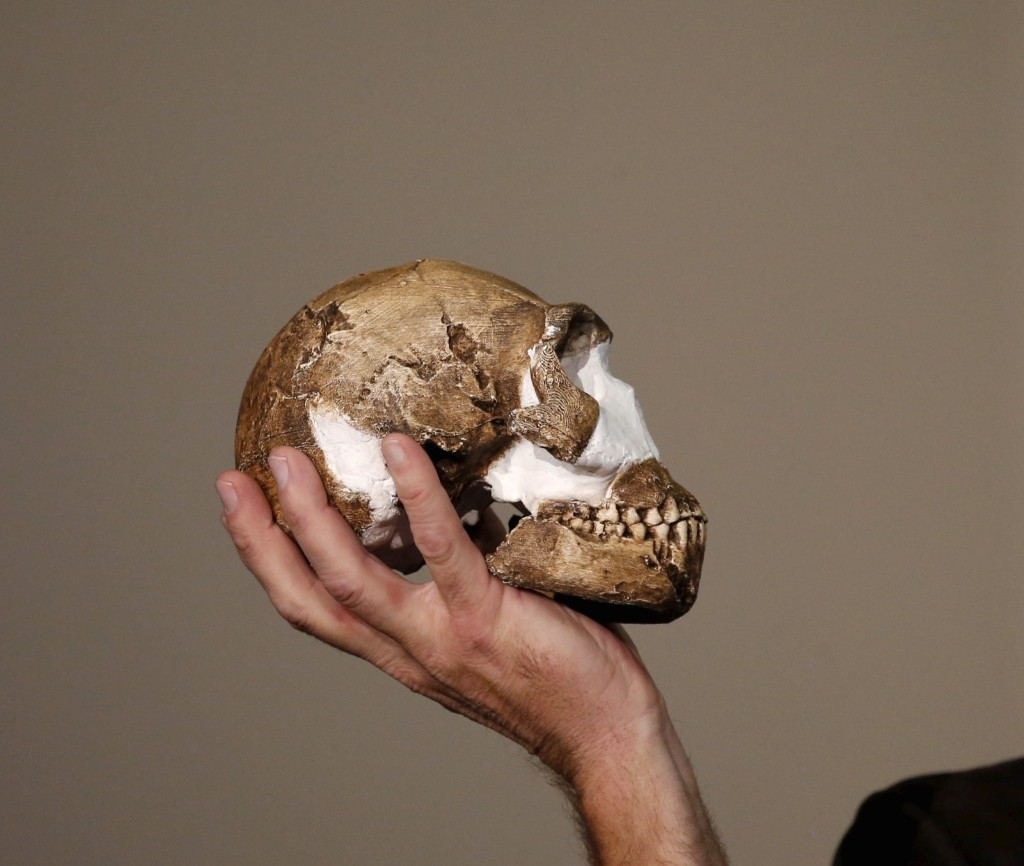 """A replica of the skull of a newly discovered ancient species, named """"Homo naledi"""", during its unveiling outside Johannesburg, Thursday. The new species has been named 'Homo naledi', in honour of the """"Rising Star"""" cave where it was found. Naledi means """"star"""" in South Africa's Sesotho language. REUTERS/Siphiwe Sibeko"""