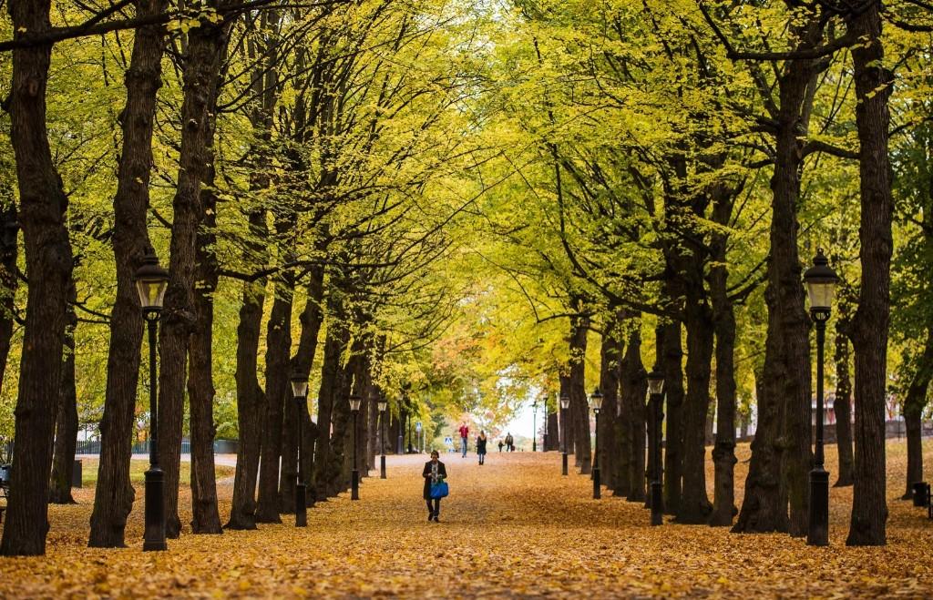 People walk under autumn trees at Humlegaarden park in Stockholm. JONATHAN NACKSTRAND/AFP/Getty Images