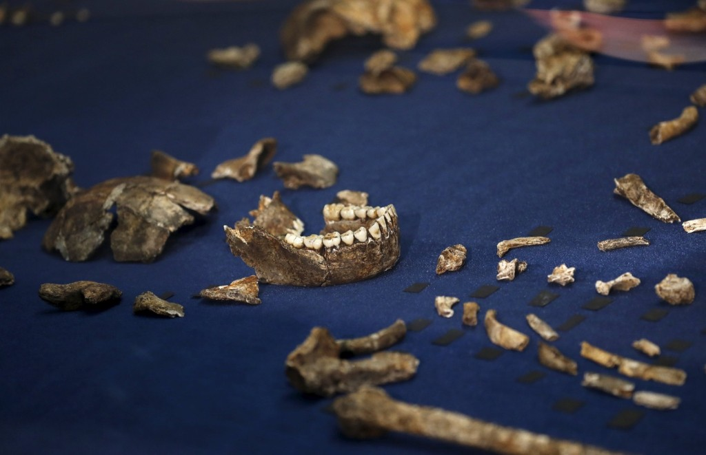 """Fossils of a newly discovered ancient species, named """"Homo naledi"""", are pictured during their unveiling outside Johannesburg, Thursday. REUTERS/Siphiwe Sibeko"""