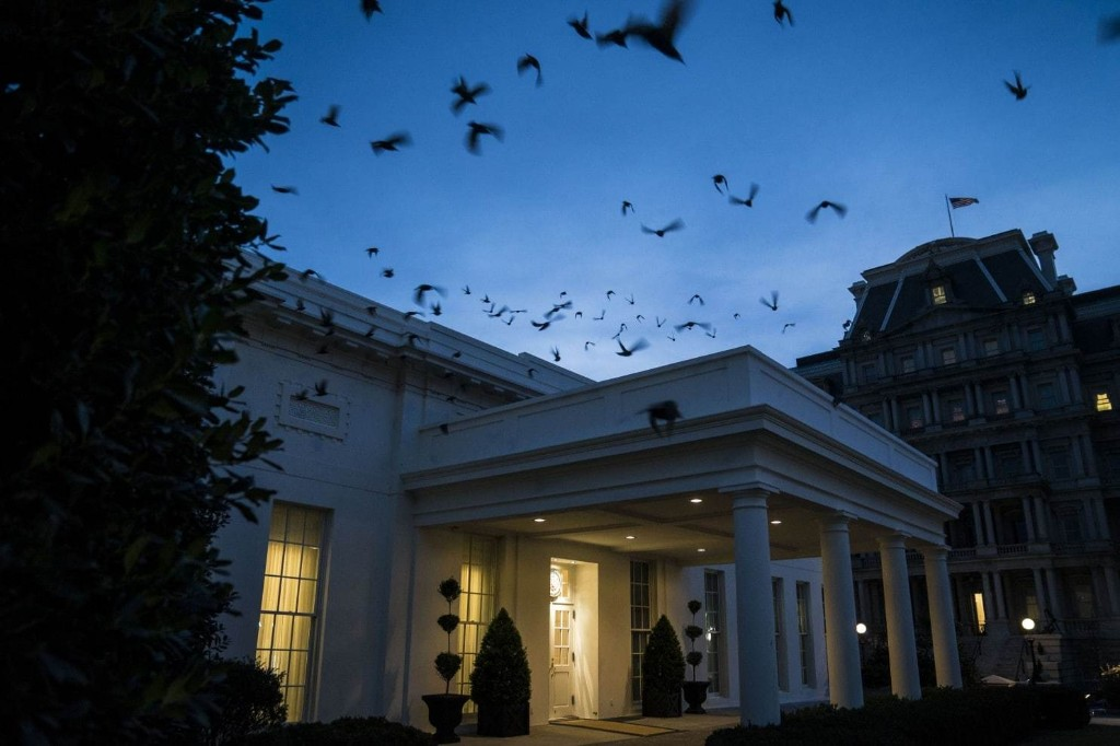 Starlings fly out of a bush and over the West Wing of the White House last Jan. 22. (Jabin Botsford/The Washington Post)