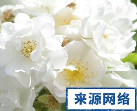 中医养生 - cover