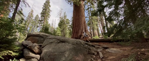 See iPhone 11 Pro's 4K camera in action with impressive footage from Sequoia National Park