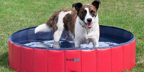 Keep your pets cool this summer with these helpful items for $40 or less